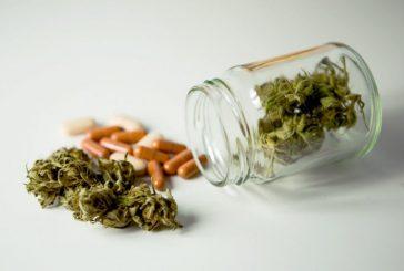 آثار منفی حشیش و ماریجوانا برای نوجوانان بیش از الکل است